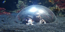 Aquarium Xanadú II 3ºB  10