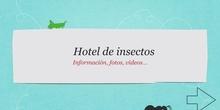 Insectos . 4 jun
