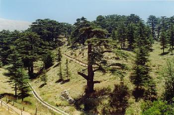 Cedros, Líbano