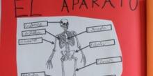 [Lapbook] - Mi atlas del cuerpo humano (3º de primaria) - IMAGEN 4