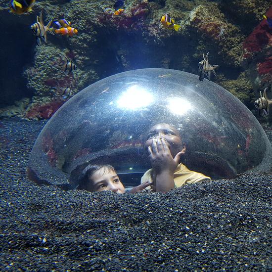Aquarium Xanadú II 3ºB  11