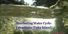 Everlasting Water Cycle: Yakushima