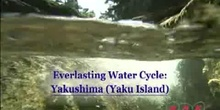 Everlasting Water Cycle: Yakushima