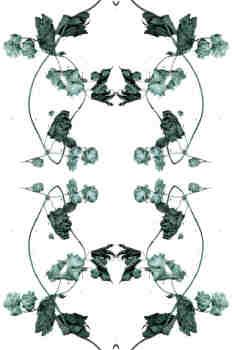 Simetría de la rama de lúpulo en verdes grisáceos
