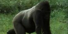 De plus en plus d'animaux et de végétaux menacés de disparition