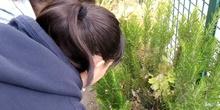 2019_06_07_Los alumnos de Quinto observan los insectos del huerto_CEIP FDLR_Las Rozas 11
