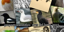 "IES LARRA ""PROYECTO CIENTÍFICO AVES"" 2015-16"