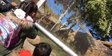 Excursión al zoo 5 años, 1º y 2º Luis Bello 24