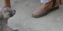 Perrito jugando en los pies, Quilombo, Sao Paulo, Brasil