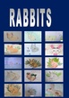 RABBITS 2nd GRADE JOAQUÍN COSTA