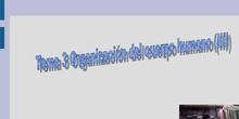 Tema 3 Organización del cuerpo humano (III)
