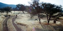 Reserva de Guepardos, Namibia