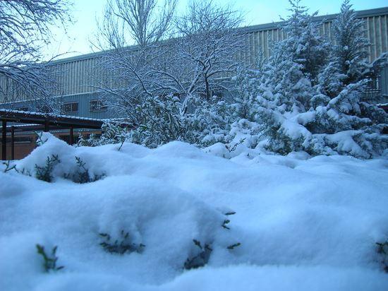 Nevada 2010 11