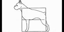 La naturaleza y la geometría (Perro 1 ESO)