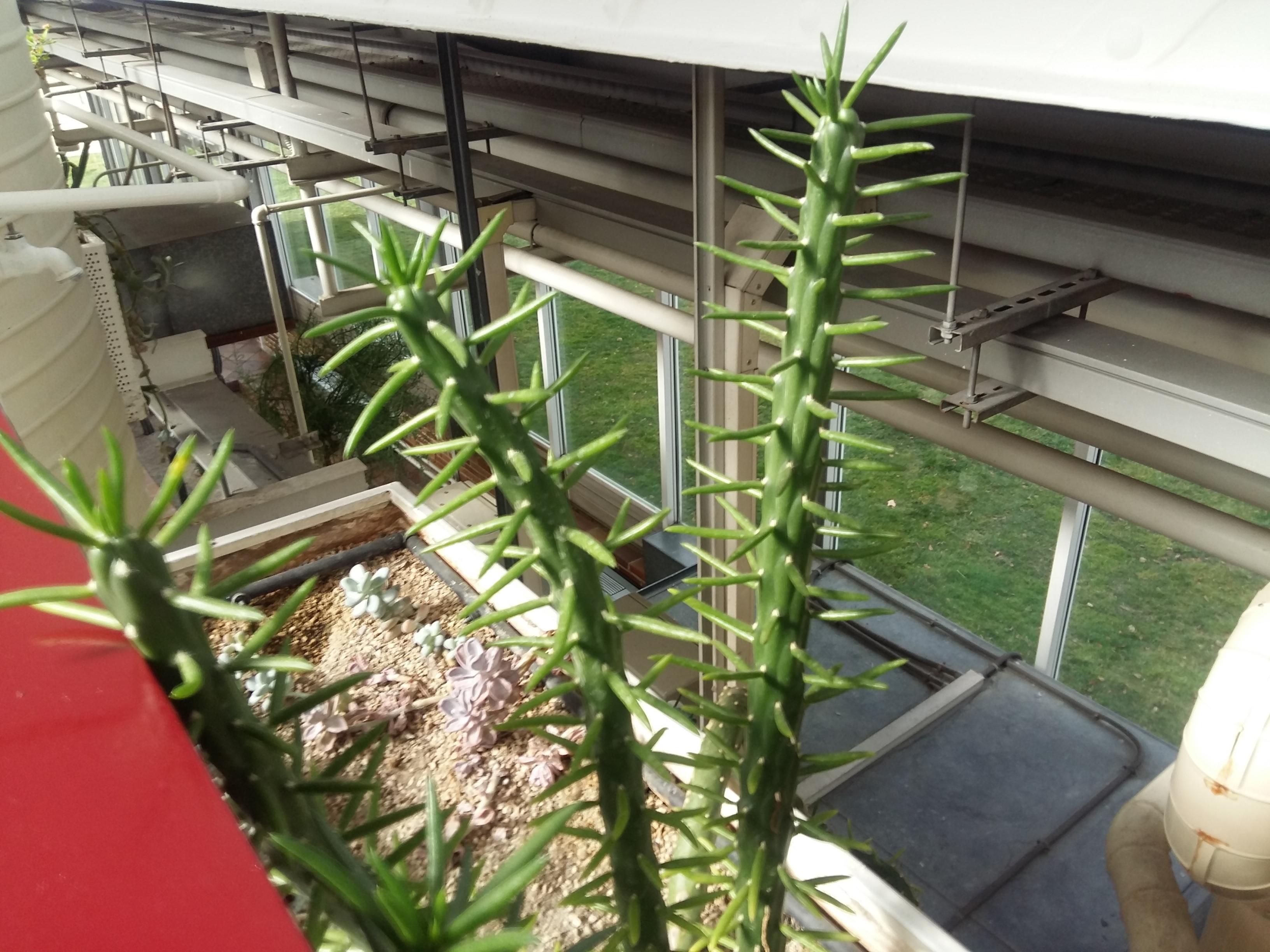 PLANTS 15