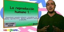 EL APARATO REPRODUCTOR MASCULINO Y FEMENINO