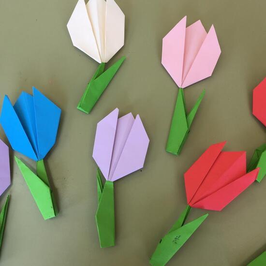 Tulipanes 4º