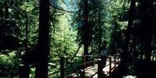 Paseo en un bosque de las Montañas Rocosas