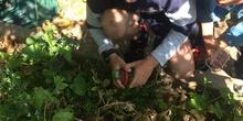 2019_06_11_4º observa insectos en el huerto_CEIP FDLR_Las Rozas 30