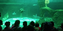 Visita al zoo 2019 30