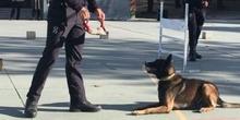 La Unidad Canina de la Policia Municipal de Las Rozas visita el cole_2_CEIP FDLR_Las Rozas_2017  2
