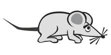 Ratón asustado