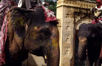 Elefantes en la subida al Palacio de Akbar, Ajmer, India