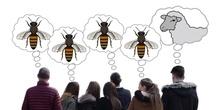 ¿Qué les pasa a las abejas?