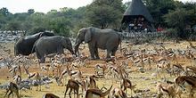 Observatorio de animales en Etosha, Namibia