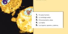 1º FPbásica Guía II (Preparación Ciencias Naturales)
