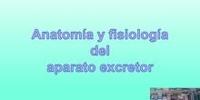 Tema 8 Anatomía y fisiología del aparato excretor