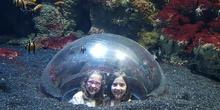Aquarium Xanadú II 3ºB  19