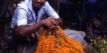 Vendedor del mercado de flores, Calcuta, India