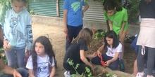 2019_05_Los alumnos de 4º en el Huerto_CEIP FDLR_Las Rozas 17
