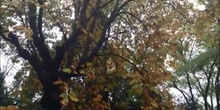 Otoño en los jardines CRIF Las Acacias de Madrid