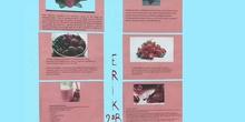 La fresa. Erik 2º B