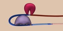 RNA Splicing