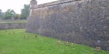 Muralla en fortaleza de Jaca, Huesca