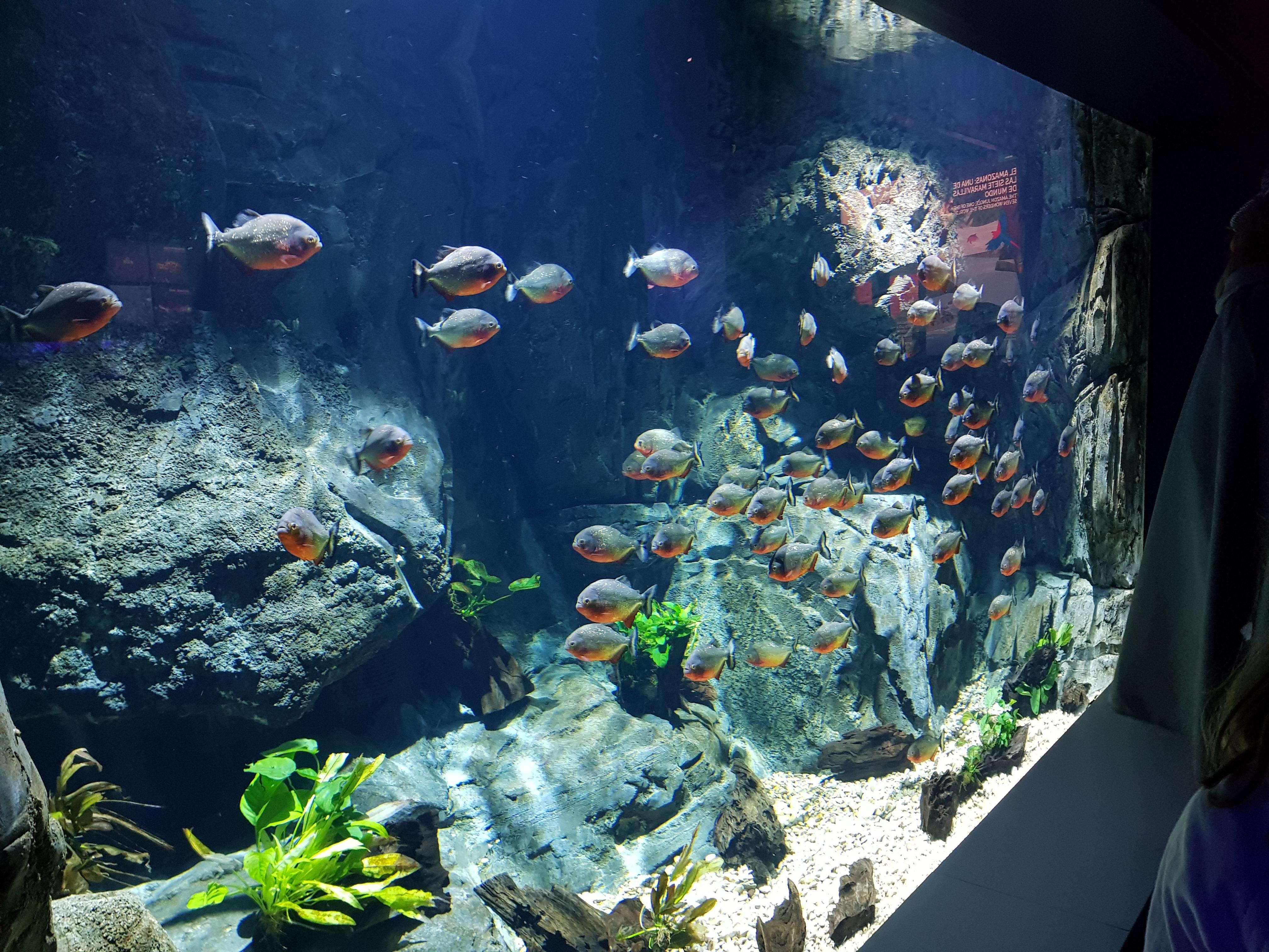 Fotos Aquarium Xanadú 3ºB 19