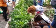 2019_06_07_Los alumnos de Quinto observan los insectos del huerto_CEIP FDLR_Las Rozas 20
