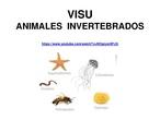 VISU INVERTEBRADOS