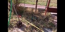 DIARIO JARDINERO 08 Cómo prevenir accidentes en jardinería (primera parte)