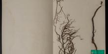 IES_SANISIDRO_MUSEO_Botanica_060