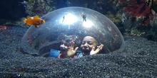 Aquarium Xanadú II 3ºB  16