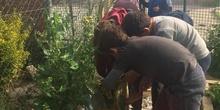 2019_05_Los alumnos de 4º en el Huerto_CEIP FDLR_Las Rozas 30