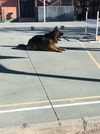 La Unidad Canina de la Policia Municipal de Las Rozas visita el cole_2_CEIP FDLR_Las Rozas_2017  1