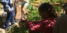 2019_06_11_4º observa insectos en el huerto_CEIP FDLR_Las Rozas 41