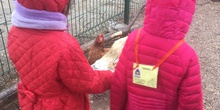 Visita a la granja 15