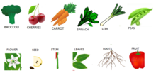 parts of the plant and vegetable match