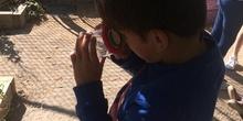 2019_06_11_4º observa insectos en el huerto_CEIP FDLR_Las Rozas 11